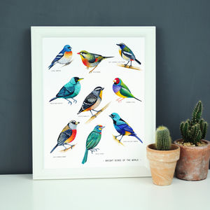Bright Birds Illustration Print - paintings