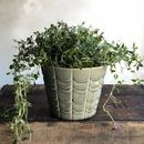 Green Scalloped Plant Pot