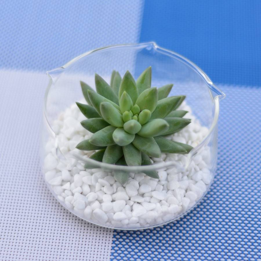 Fish Bowl Shaped Vase Succulent Terrarium By Dingading Terrariums