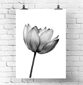 Black And White Plant Print