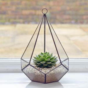 Geometric Diamond Glass Terrarium - flowers, plants & vases