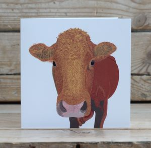 Shapinsay Cow Card