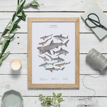 Shark Wildlife Print