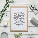 Shark Wildlife Print Unframed