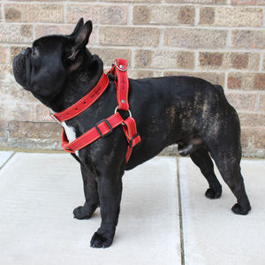 Leather Dog Harness - dog walking accessories
