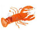 'Lobster' Hand Signed Open Edition Art Print