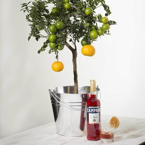 Grow Your Own Campari