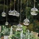 Hanging Glass Vase Air Plant Terrarium Kit