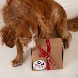 Christmas Eve Activity Gift Box For The Dog