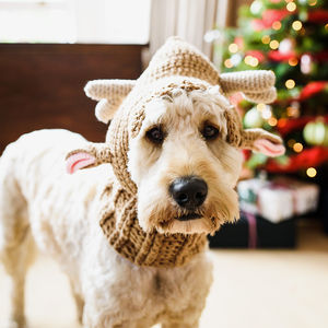 Santa's Little Helper Reindeer Dog Hat - clothes & accessories