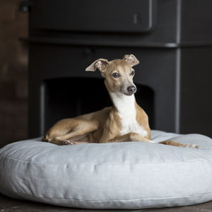 Charley Chau Round Dog Bed Mattress - floor cushions