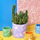 Digital Workshop And At Home Terrazzo Pot Kit
