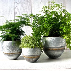 Set Of Three Galvanised Steel Planters