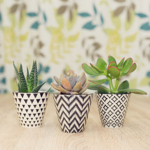 Set Of Three Mini Planters With Succulents