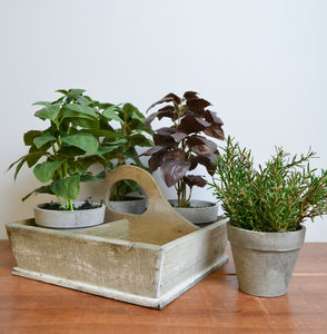 Faux Herb Pots Set Of Four