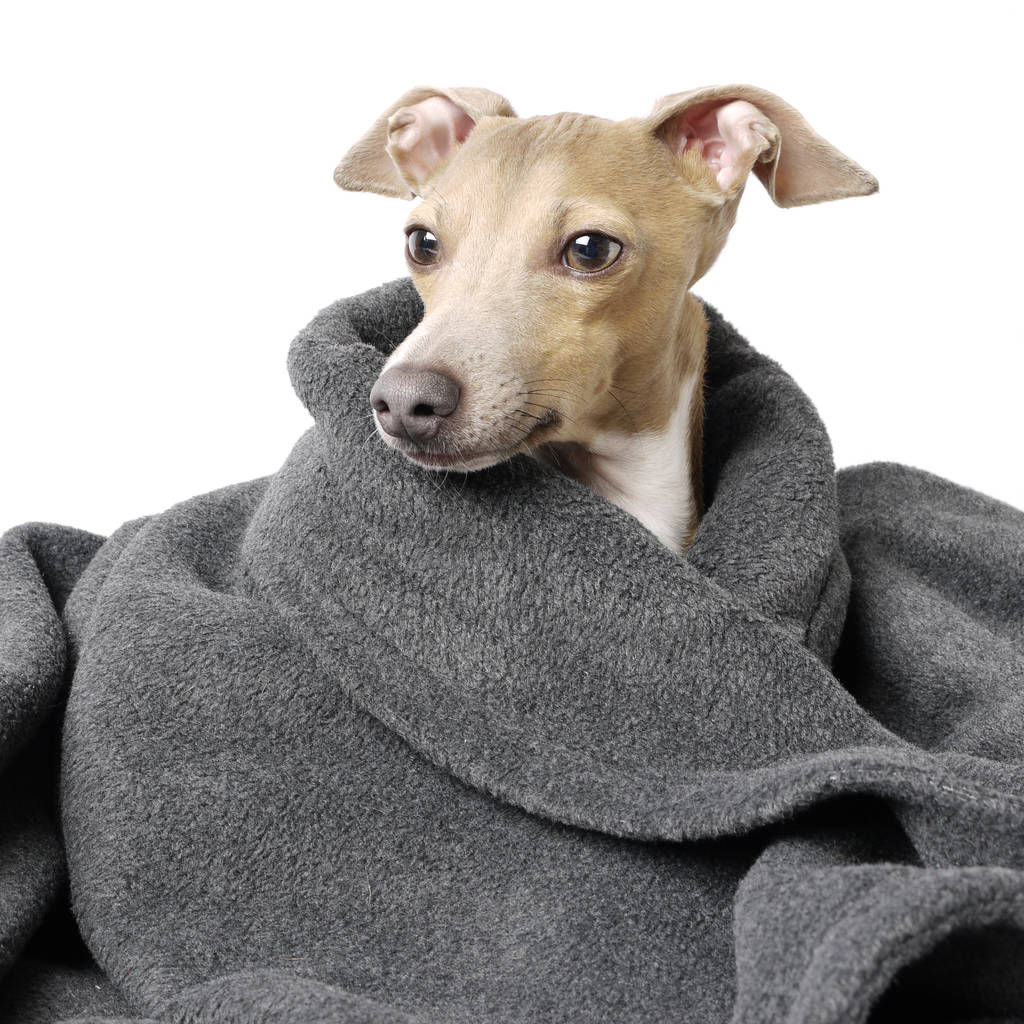 Large Blanket For Dogs