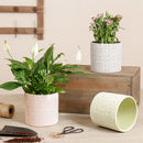 Pastel Mosaic Plant Pot Collection