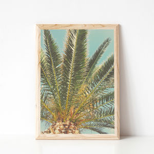 Summer Palm Photographic Print - nature & landscape
