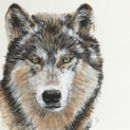 Wild Grey Wolf Original Acrylic Painting