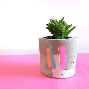 Bon Concrete Pot With Succulent Plant - vases