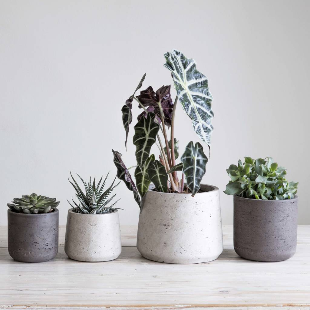 cement plant pot set of two by idyll home | notonthehighstreet.com