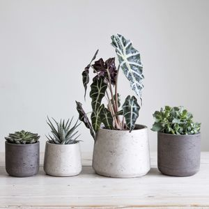 Cement Plant Pot Set Of Two - pots & planters