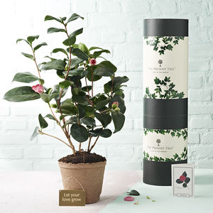 Camellia 'Love And Devotion' Tree Gift - personalised wedding gifts