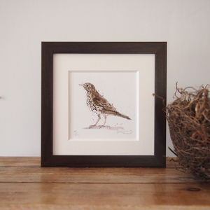 Limited Edition, Garden Bird Print, Songthrush