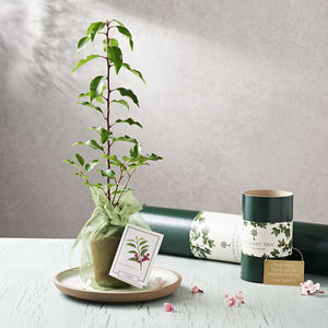 Flowering Cherry Tree Gift - gardener