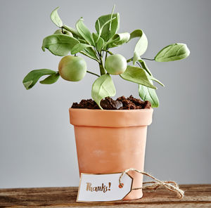 Edible Apple Tree Flour Pot Cake - thank you gifts