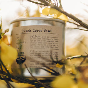 Irish Gorse Wind Soy Candle - candles & home fragrance