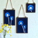 Set Of Three Framed Dandelion Blue Prints