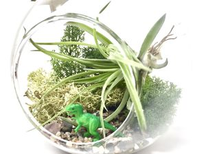 Trex Air Plant Terrarium Diy Kit - flowers, plants & vases