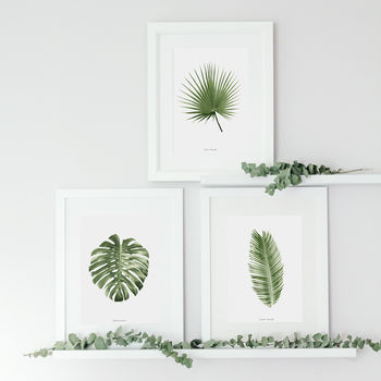 Set Of Three Botanical Palm Leaf Prints