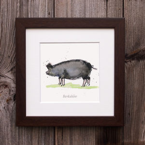 Limited Edition Pig Print. Berkshire