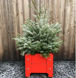'It's Christmas' Festive Metal Planter - what's new