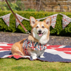 Union Jack Linen Dog Harness - dog leads & harnesses