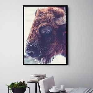 Buffalo Bruce, Canvas Art - animals & wildlife