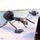 Ant Handmade Recycled Metal Wall Art Set Of Three