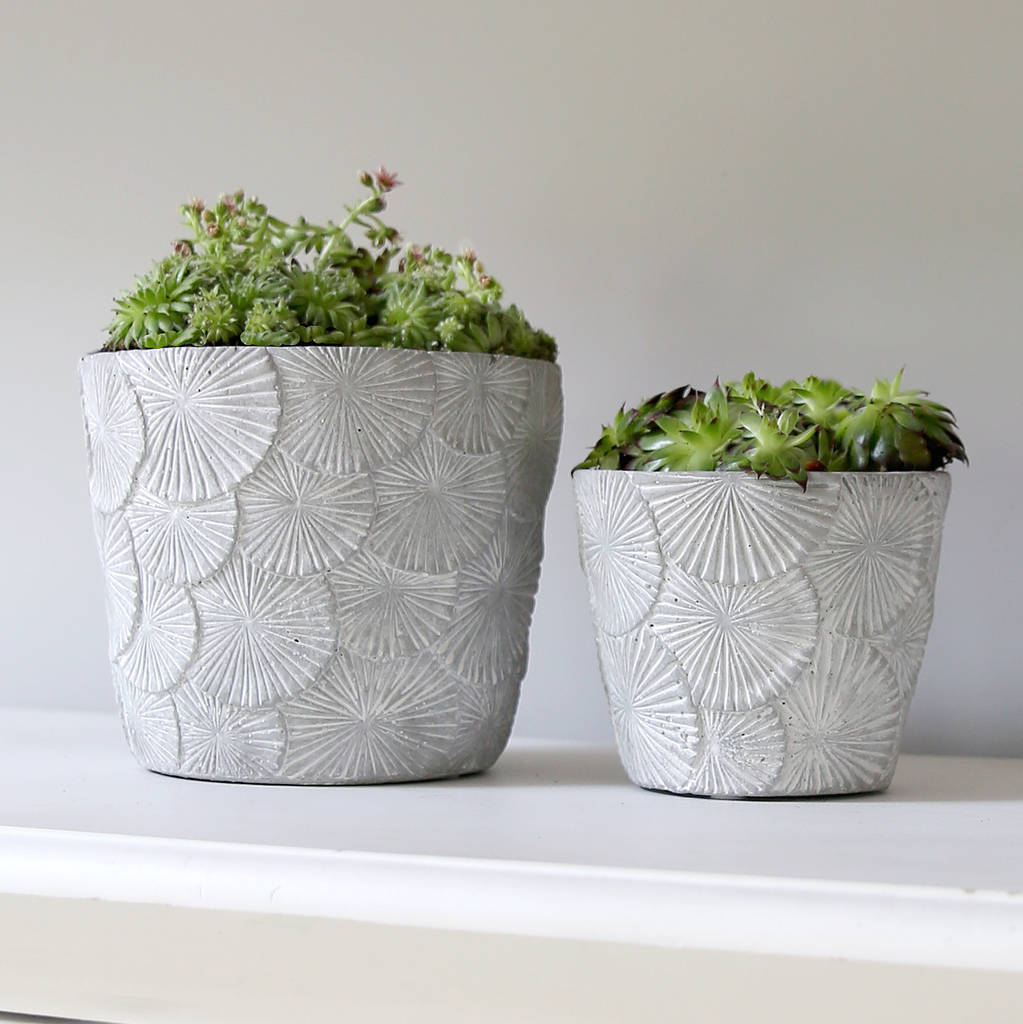 concrete fan plant pot by red lilly. Black Bedroom Furniture Sets. Home Design Ideas