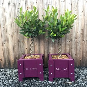 'I'm A Tree…Me Too' Metal Doorstep Planters