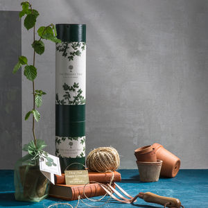 Exclusive Truffle Tree Gift - plant whisperer