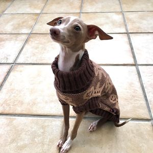 Festively Spiced Gingerbread Dog Jumper