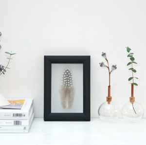 Framed Guinea Fowl Feather - still life