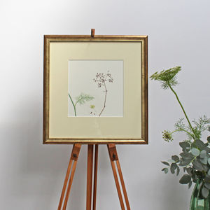Fennel Original Botanical Watercolour - nature & landscape