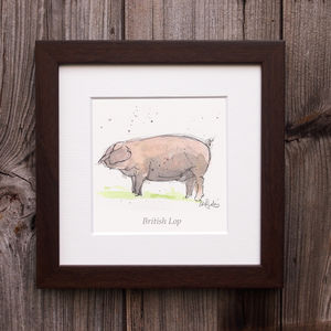 Limited Edition Pig Print. British Lop