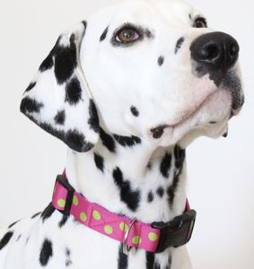 Nancy Spotty Dog Collar