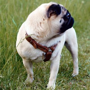 Deluxe Leather Dog Harness - new in pets