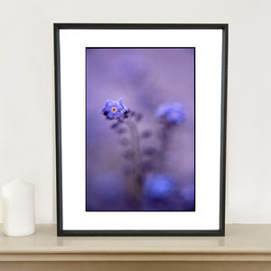 Blue Myosotis Photographic Art Print