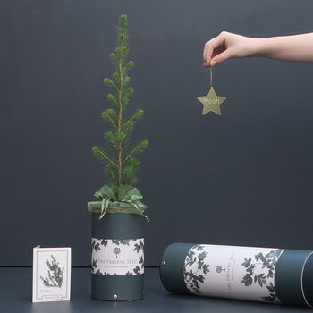 Personalised Star And Christmas Tree Gift
